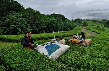 закон краснодарского края о чае